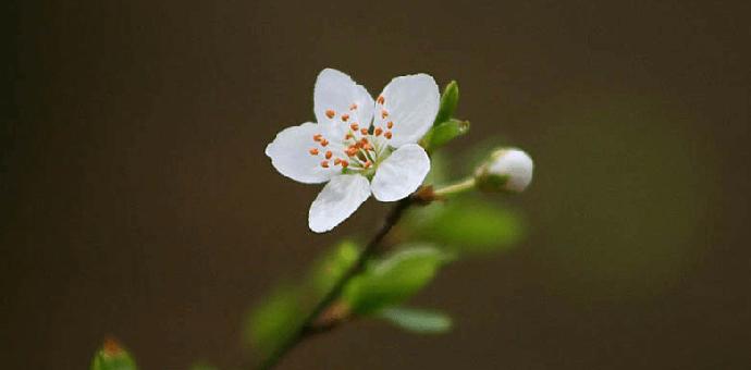flower 3285015 960 720 690x340 - Tổng hợp 199+ stt đá đểu thâm thúy độc – cay & nhột