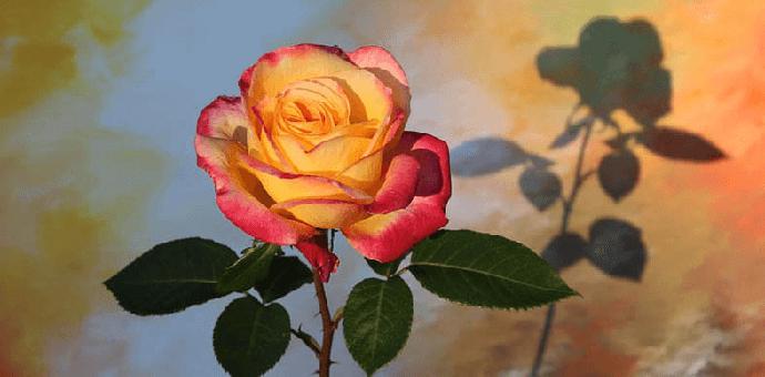 flower 3350465 960 720 690x340 - Bst stt ngắn hài hước, bá đạo nhận triệu like trên Facebook