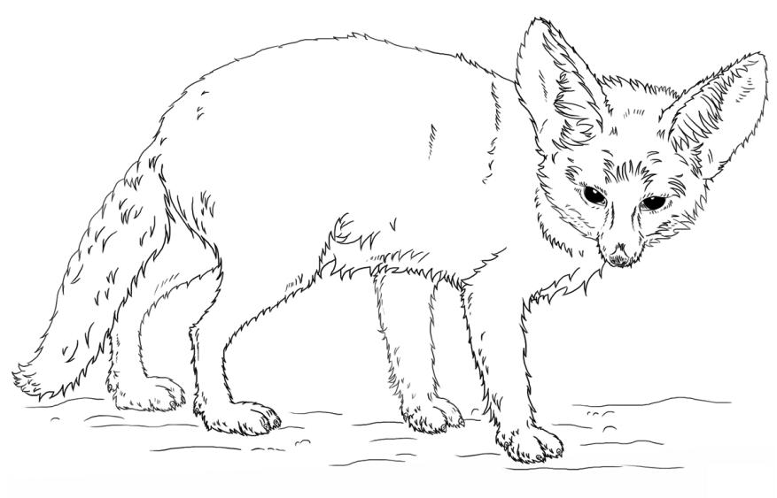 cáo fennec
