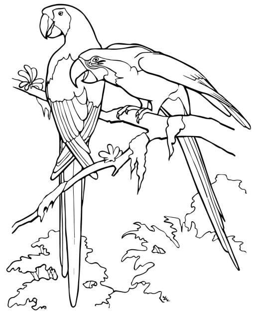 2 con vẹt đỏ đuôi dài