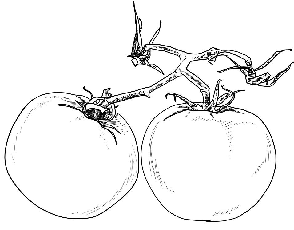 2 quả cà chua